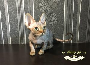 Nikola Furry joy 1