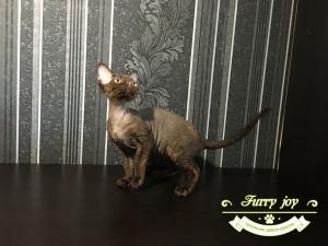Ofelia Furry joy 1