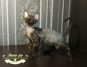 Olsen Furry joy 3