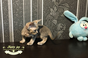 Penilopa Furry joy 2