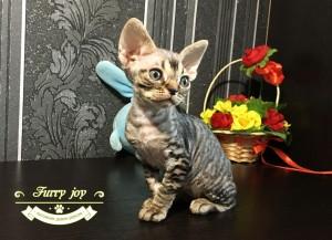 Patrisia Furry joy 2