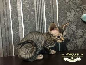 Polina Furry joy 3